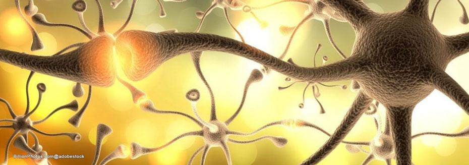 neuronal basis of agoraphopbia
